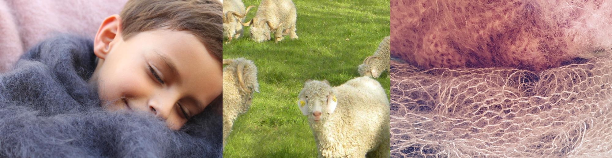Photo plaid, écharpe en mohair et chèvres angora